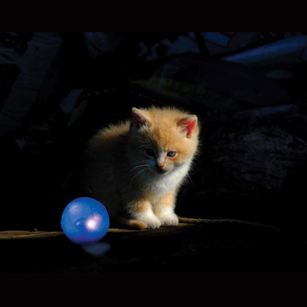 Twinkle ball de Petstages et chat