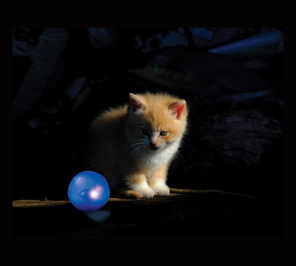 Twinkle ball de Petstages et chat